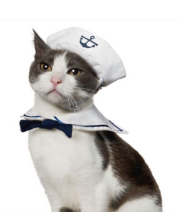 cat-sailor-costume-ictcrop_300