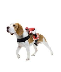 jockey-dog_300